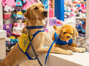 Yellow puppy wearing a Canine Companions puppy vest sitting next to a brown bear