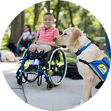 Person in wheelchair and dog