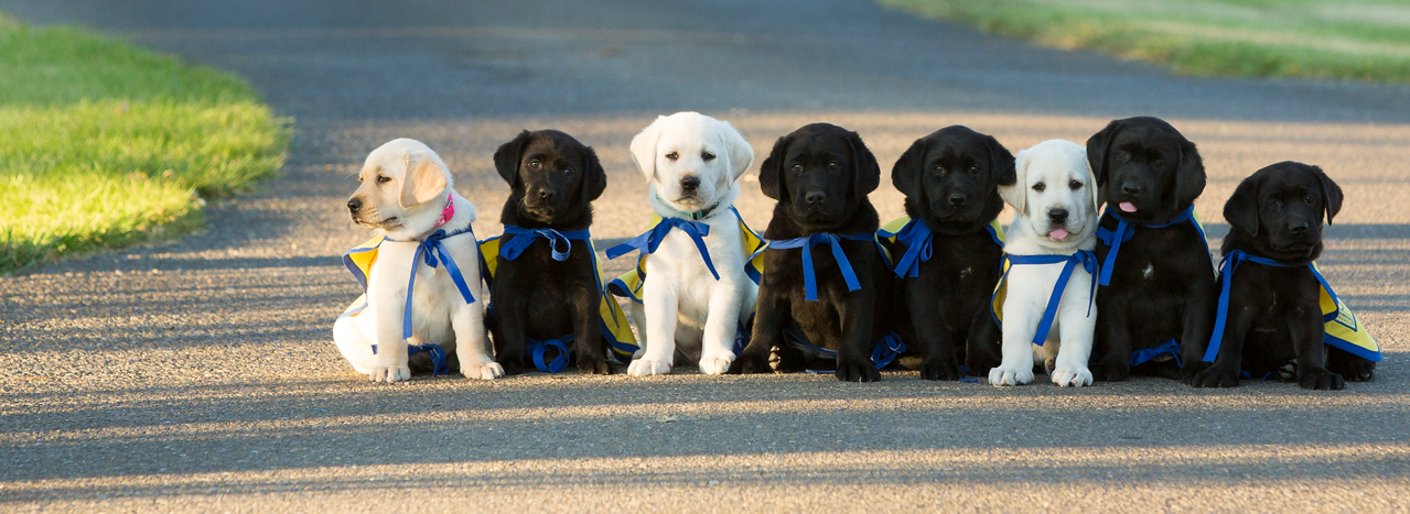 Group of puppies sitting on a road