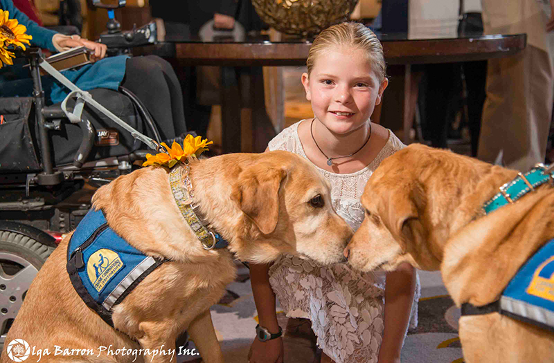 two Canine Companions service dogs sniffing noses with a young girl behind them