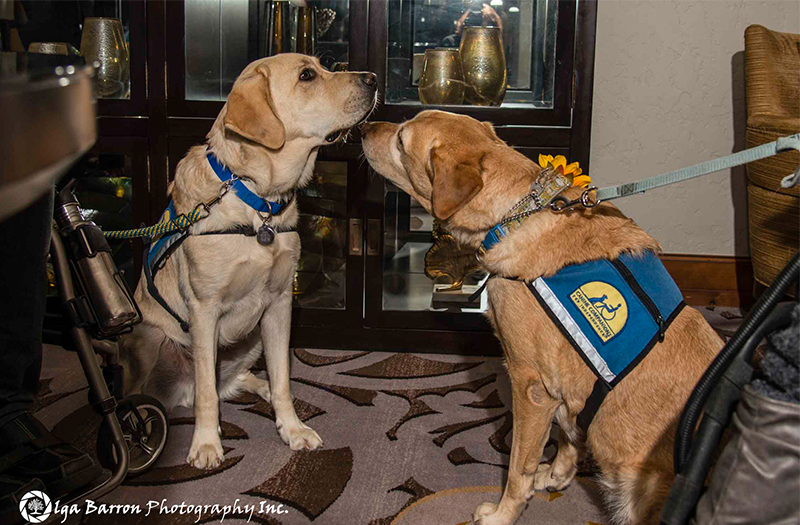 Canine Companions service dogs sniffing noses