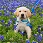 puppy in flower field