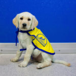 puppy with blue background
