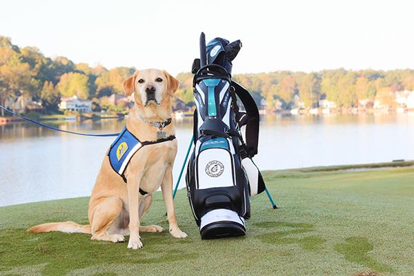 Canine Companions service dog sitting next to golf bag