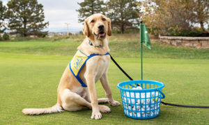 Canine Companions dog sitting at golf course