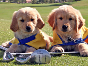 Canine Companions puppies