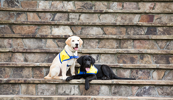 puppies on stairs