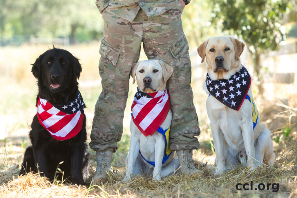 3 canine companions dogs with bandanas standing next to person with camo