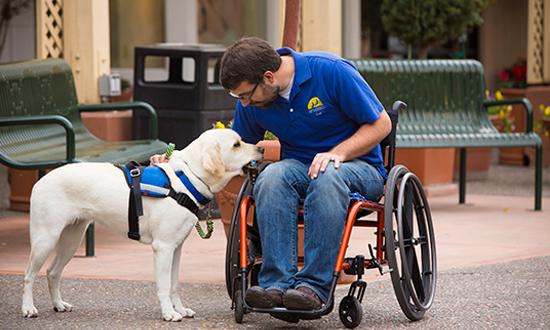 man in wheelchair pets dog