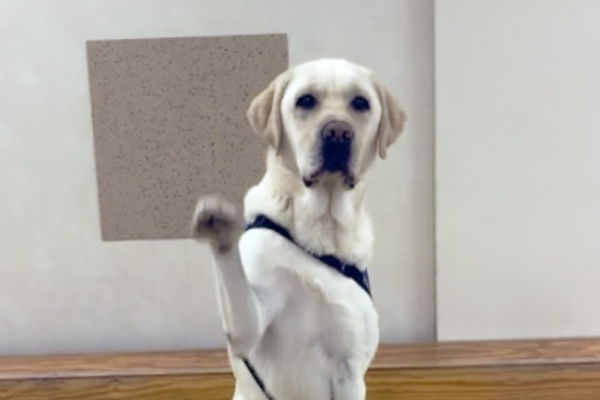 Screenshot of the Say Hi video challenge showing a dog saying hi with his paws up