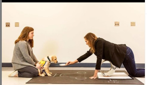 Two people working with a Canine Companions puppy