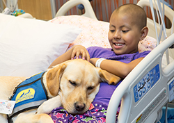 child in hospital bed with service dog sleeping on cheast