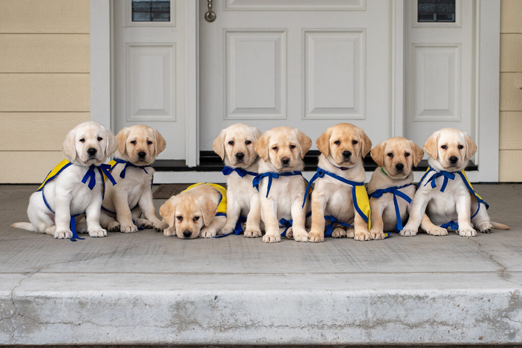 Litter of puppies on porch