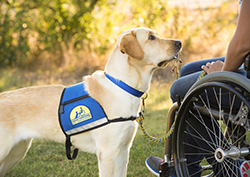 service dog handing keys to person sitting in wheelchair