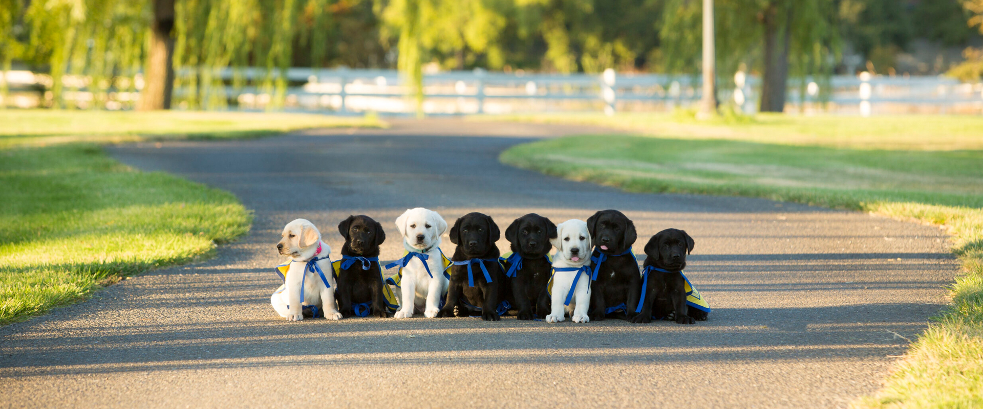 8 puppies aligned on a driveway