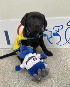 black dog with plush toy