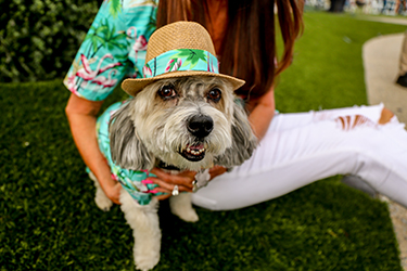 dog wearing tropical themed hat