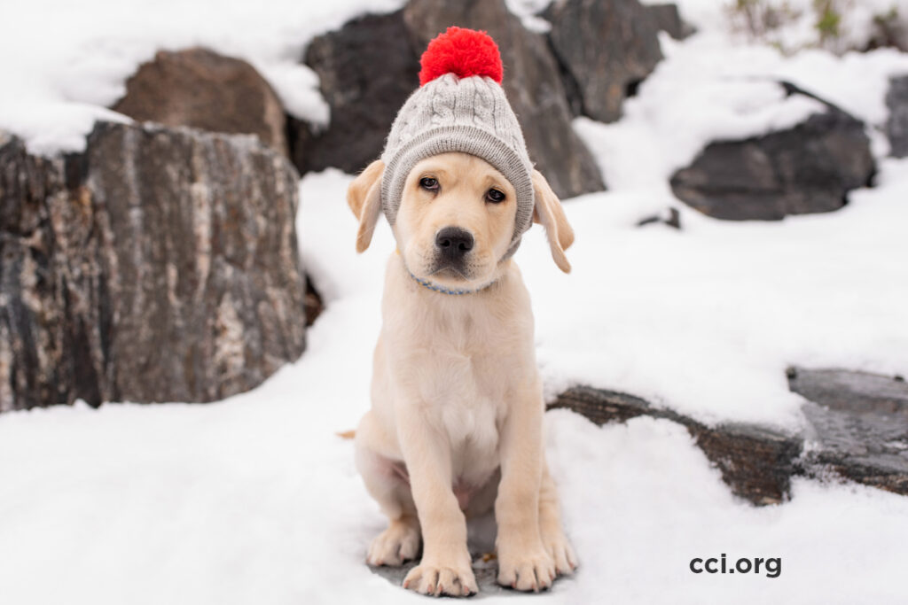 Canine Companions puppy with winter hat on in the snow
