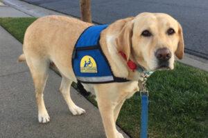 Service dog Flo
