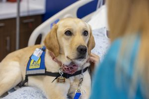 Canine Companions dog on hospital bed
