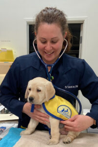 Veterinarian Dr. Sarah Lee checks a yellow Canine Companions puppy