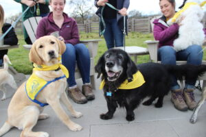 a yellow Canine Companions puppy and a black dog both wearing yellow DogFest bandanas