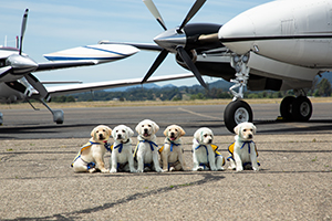line of puppies sitting in front of planes
