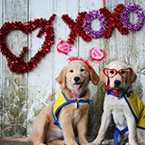 two canine companions puppies with valentine's decorations