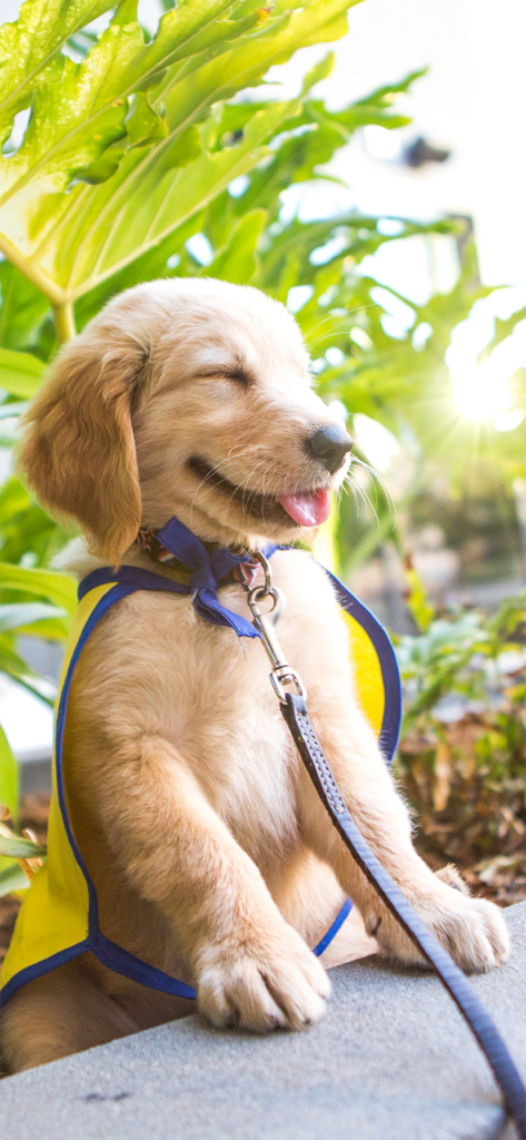 cute Canine Companions puppy with squinty eyes and tongue out