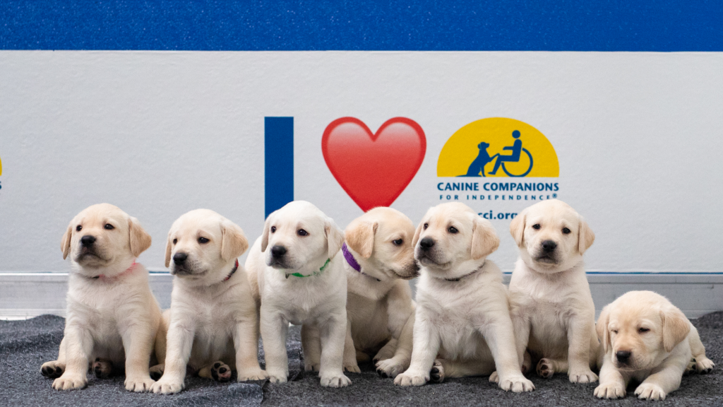 puppies lined up in front of Canine Companions logo