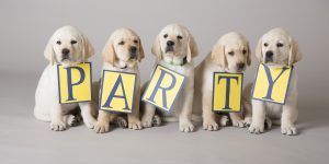 "yellow Canine Companions puppies sit with signs on them that read ""party"""