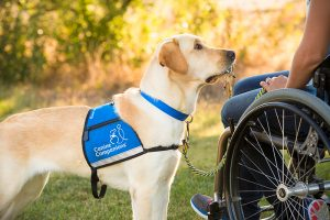 Dog holding a key to a graduate in wheelchair