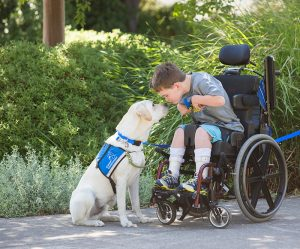 Boy in wheelchair with service dog nose to nose