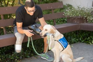 service dog retrieve prothesis