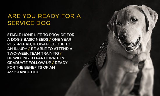 Are you ready for a service dog?