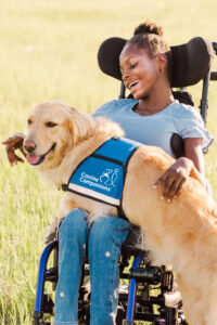 Girl in wheelchair smiling at a golden retriever dog sitting on her lap who is wearing a blue vest with the text Canine Companions