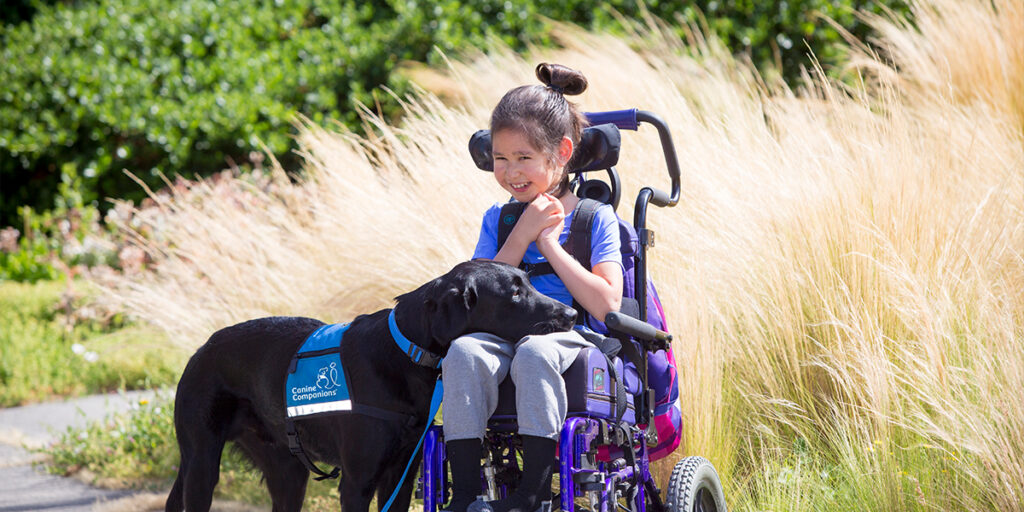 Canine Companions service dog resting its face on the lap of a child in a wheelchair