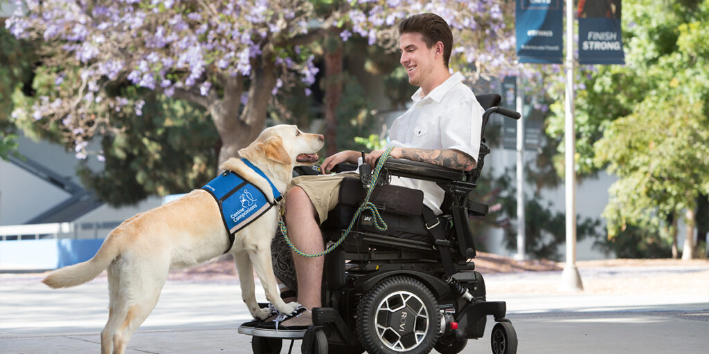 Canine Companions service dog doing step command